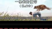 《一條狗的使命》鏟屎官們非常喜歡的一部電影, 值得一看