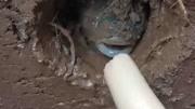 農村小夥發現田邊小洞裡有動靜,挖開後驚訝了,這是什麼生物